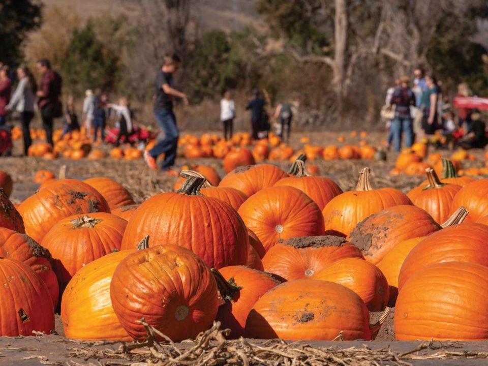 Chatfield Pumpkin Festival