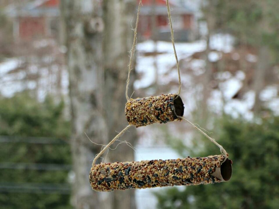 Double decker, recycled TP or PT tube bird feeder.