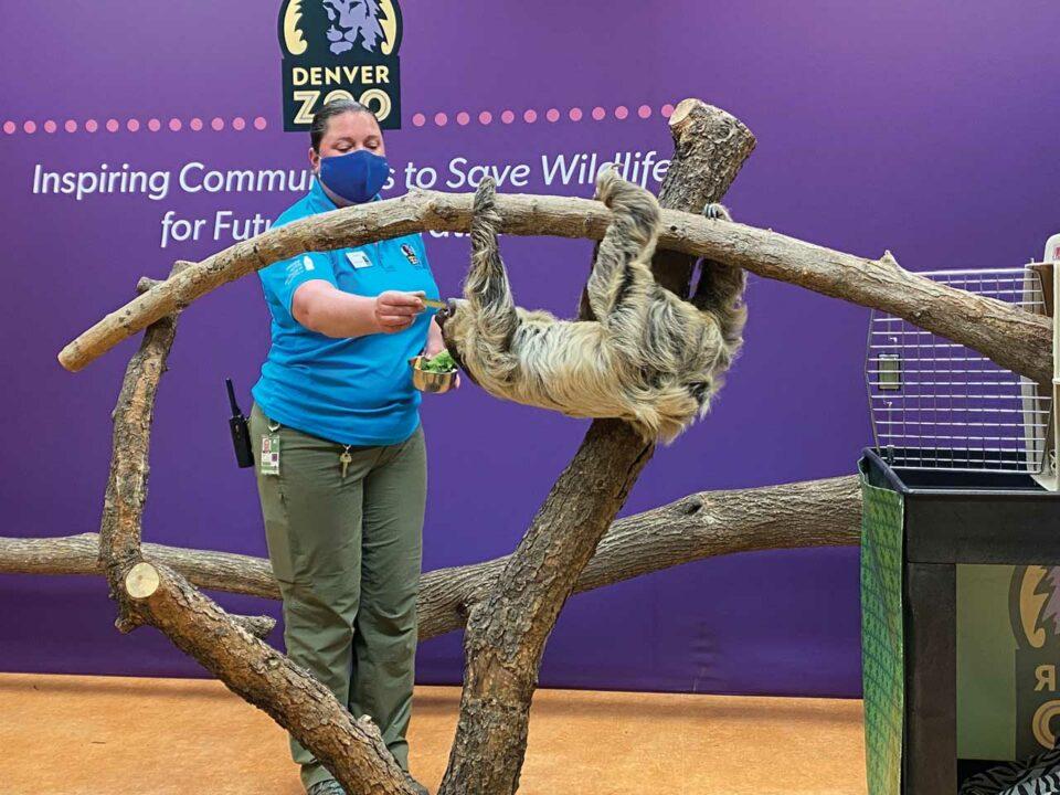 Denver zoo animal encounters